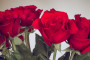 Free High Quality Valentines Roses Photos